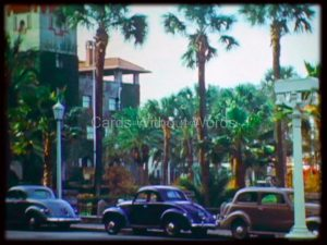 Cars and Palms