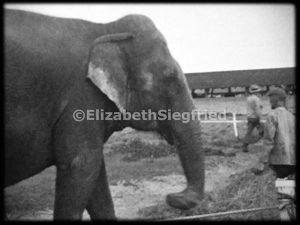 Elephant at Ringling