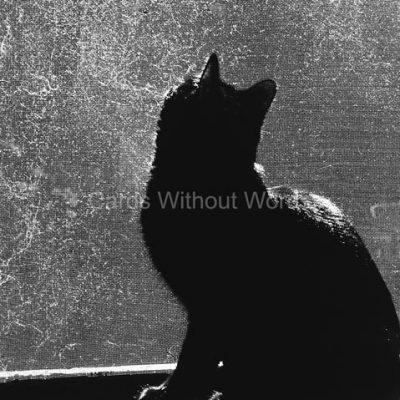 Window Screen Kitty