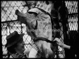 Woman and Giraffe